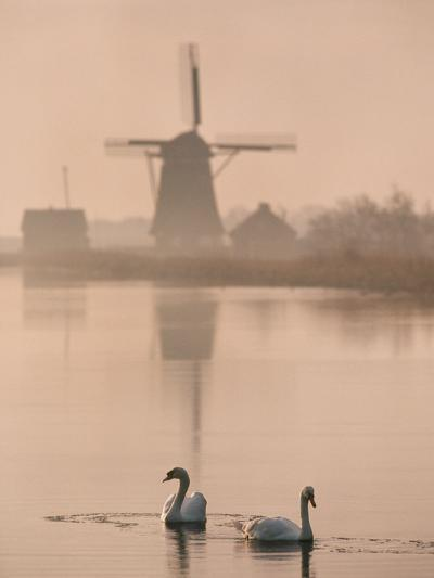Swans and Windmill, Texel, Netherlands-Frans Lanting-Photographic Print