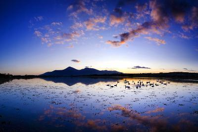 Swans at Dusk on Dundrum Bay, Mournes, County Down-Chris Hill-Photographic Print