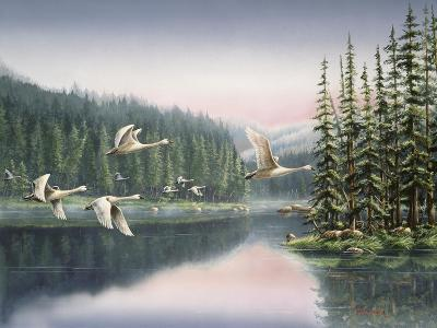 Swans at Sunrise-Wanda Mumm-Giclee Print