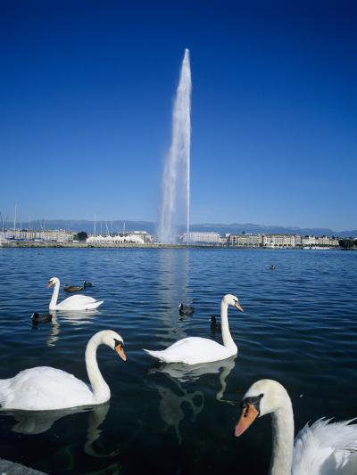 Swans Below the Jet D'Eau (Water Jet), Geneva, Lake Geneva (Lac Leman), Switzerland, Europe-Stuart Black-Photographic Print