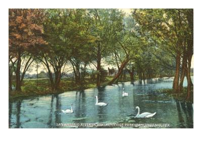 Swans in Brackenridge Park, San Antonio, Texas--Framed Art Print