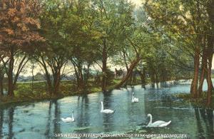 Swans in Breckenridge Park, San Antonio, Texas