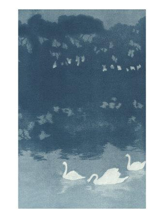 Swans in Dusk--Art Print