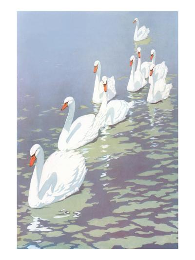 Swans in Line--Art Print