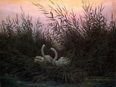 Swans in the Reeds, C1794-C1831-Caspar David Friedrich-Giclee Print