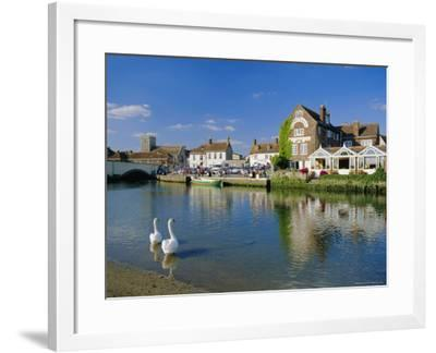 Swans on the River Frome, Wareham, Dorset, England, UK-Ruth Tomlinson-Framed Photographic Print