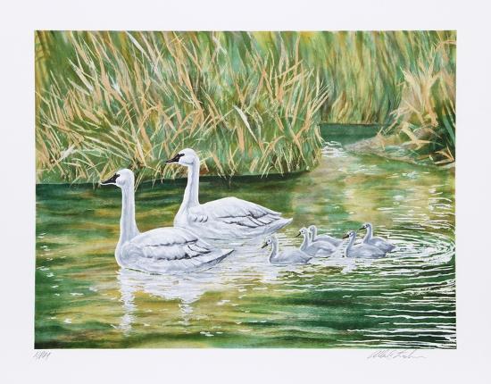 Swans-Allen Friedman-Limited Edition