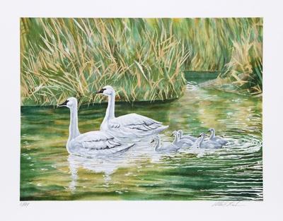 https://imgc.artprintimages.com/img/print/swans_u-l-f5eq600.jpg?p=0