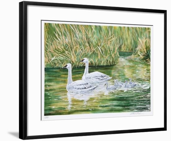 Swans-Allen Friedman-Framed Limited Edition