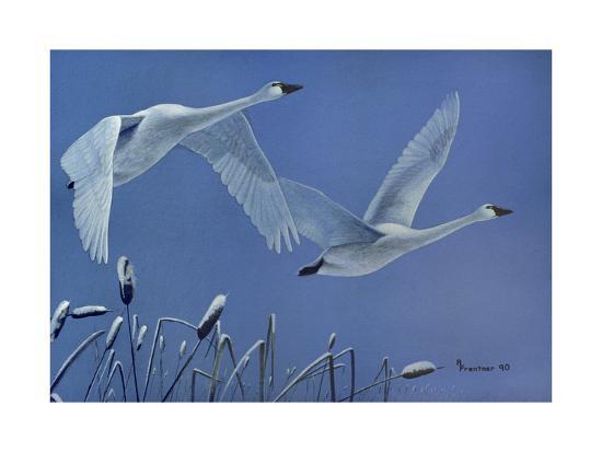 Swans-Rusty Frentner-Giclee Print