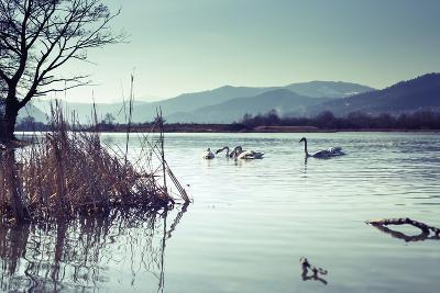 Swans-Sebastian RADU-Photographic Print