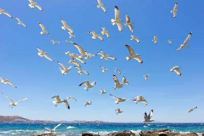 Swarm of Sea Gulls Flying close to the Beach of Mykonos Island,Greece-smoxx-Photographic Print