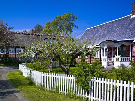 Sweden, Half-Timbered Houses in Brick, White Wooden Blossoming Fruit Trees, Spring-K. Schlierbach-Photographic Print