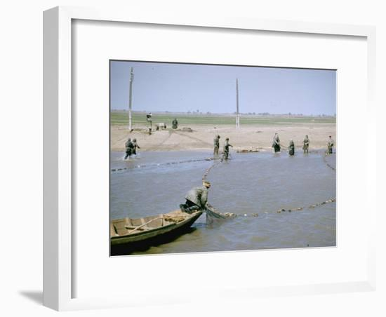 "Sweep Net Fishing for Sturgeon at ""Tanya"" in Volga River Delta Nr. Astrakhan, Russia-Carl Mydans-Framed Photographic Print"