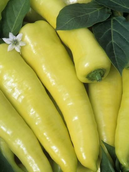 sweet Banana' Sweet Peppers (Capsicum Annuum)-Wally Eberhart-Photographic Print