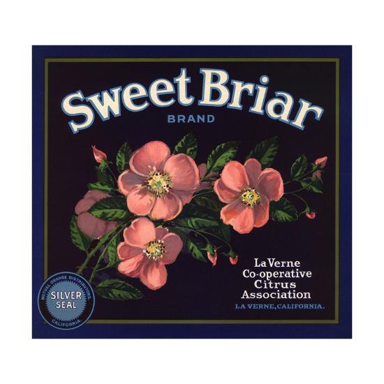 Sweet Briar Brand - La Verne, California - Citrus Crate Label-Lantern Press-Art Print