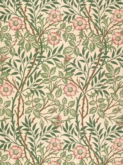 sweet Briar' Design for Wallpaper, Printed by John Henry Dearle (1860-1932) 1917-William Morris-Giclee Print