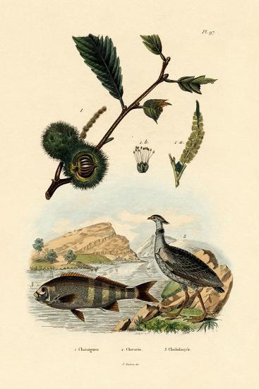 Sweet Chestnut, 1833-39--Giclee Print