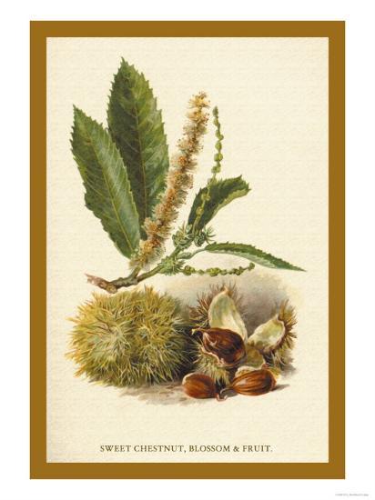 Sweet Chestnut, Blossom and Fruit-W^h^j^ Boot-Art Print
