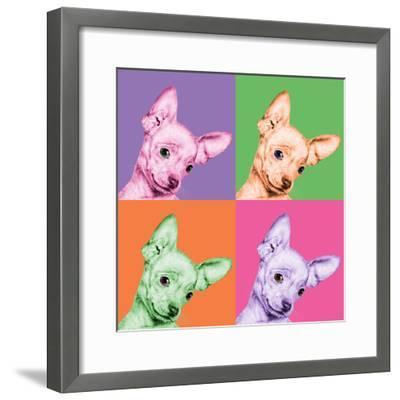 Sweet Chihuahua Pop-Jon Bertelli-Framed Photographic Print