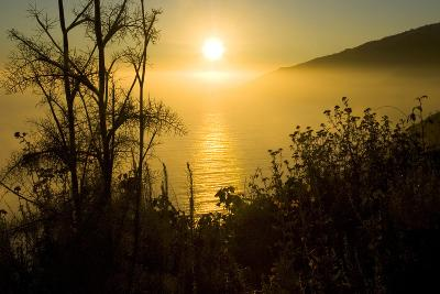 Sweet Fennel, Foeniculum Vulgare, Silhouetted Against a Setting Sun in Big Sur-Paul Colangelo-Photographic Print