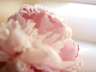 Sweet Flower II-Nicole Katano-Photo