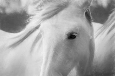 https://imgc.artprintimages.com/img/print/sweet-horse_u-l-q1c5ppv0.jpg?p=0