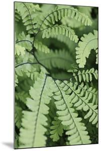 Fern, Bracken by Sweet Ink