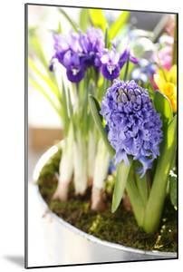 Hyacinth, Iris in Pot by Sweet Ink
