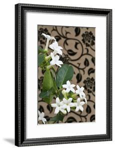 Madagascar Jasmine or Waxflower, Blossoms, Indoor Plant, Climbing Plant by Sweet Ink