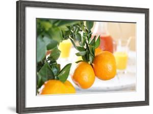 Orange Tree, Branch with Fruits, Citrus Mitis Calamondin by Sweet Ink