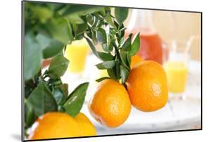 Orange Tree, Branch with Fruits, Citrus Mitis Calamondin by Sweet Ink