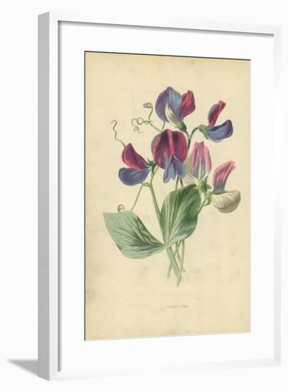 Sweet Pea-Frederick Edward Hulme-Framed Giclee Print
