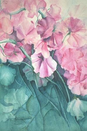Sweet Peas, Pink Pride-Karen Armitage-Giclee Print