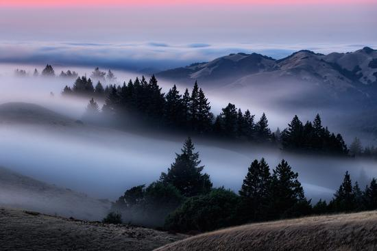 Sweet Post Sunset Light and Fog, Hills of Mount Tam, Northern California  Photographic Print by Vincent James | Art com