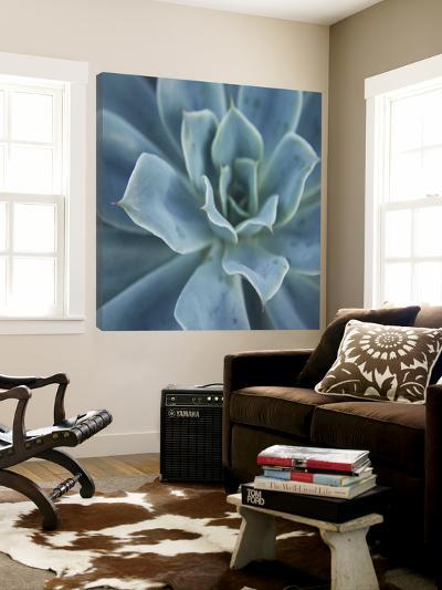 Sweet Succulent-Karen Ussery-Loft Art