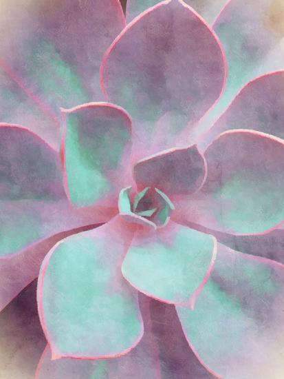 Sweet Succulent-Emanuela Carratoni-Art Print