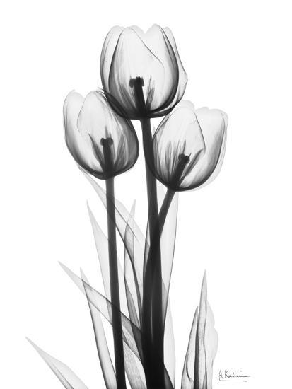 Sweet Tulips in Black and White-Albert Koetsier-Art Print