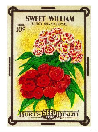 https://imgc.artprintimages.com/img/print/sweet-william-seed-packet_u-l-q1gnua90.jpg?p=0