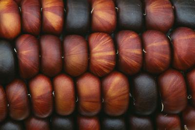 Sweetcorn Grains-Kaj Svensson-Photographic Print