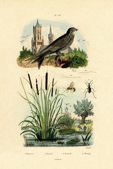 Swift, 1833-39--Giclee Print