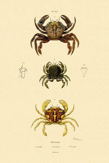 Swimming Crabs, 1833-39--Giclee Print