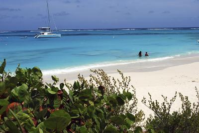 Swimming the Waters of Prickly Pear Island with Festiva Sailing Vacations-Lynn Seldon-Photographic Print