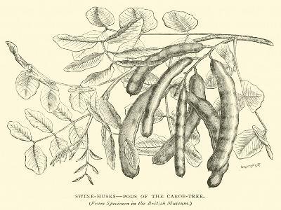 Swine-Husks, Pods of the Carob-Tree--Giclee Print