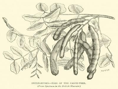 https://imgc.artprintimages.com/img/print/swine-husks-pods-of-the-carob-tree_u-l-ppbjby0.jpg?p=0