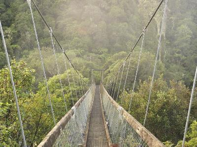 Swingbridge, Motu Falls, Motu, Gisborne, North Island, New Zealand, Pacific-Jochen Schlenker-Photographic Print