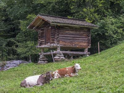 Switzerland, Bern Canton, Ballenberg, Dairy Cows and Cheese Storehouse-Jamie And Judy Wild-Photographic Print