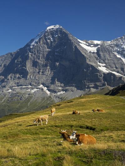 Switzerland, Bern Canton, Mannlichen Area, Swiss Cows , Background-Jamie And Judy Wild-Photographic Print