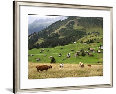 Switzerland, Bern Canton, Murren, Cows Grazing in Alpine Pastures-Jamie And Judy Wild-Framed Photographic Print