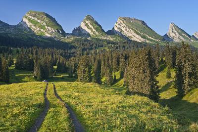 Switzerland, St. Gallen, Chur Prince, Alpine Grassland, Lanes-Rainer Mirau-Photographic Print